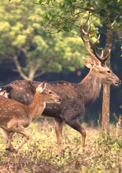 Động Vật Hoang Dã Tại Serengeti