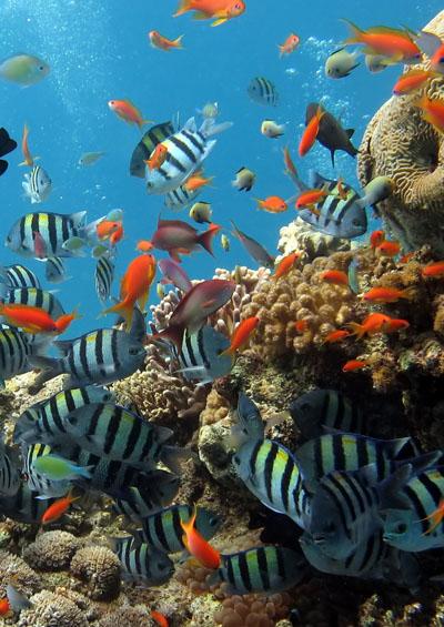 Sinh Vật Biển Việt Nam - Cá Rạn San Hô