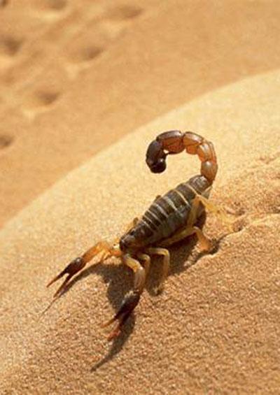 Sự Sống Trên Hoang Mạc Khô Cằn