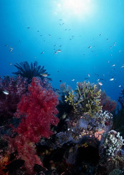 Vẻ Đẹp Trái Đất 11 : Dưới Đáy Đại Dương
