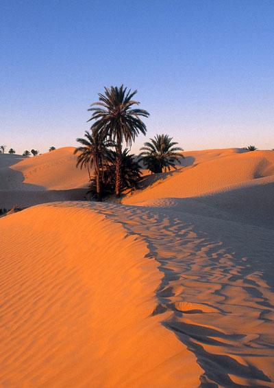 Vẻ Đẹp Trái Đất 5: Sa Mạc Huyền Bí