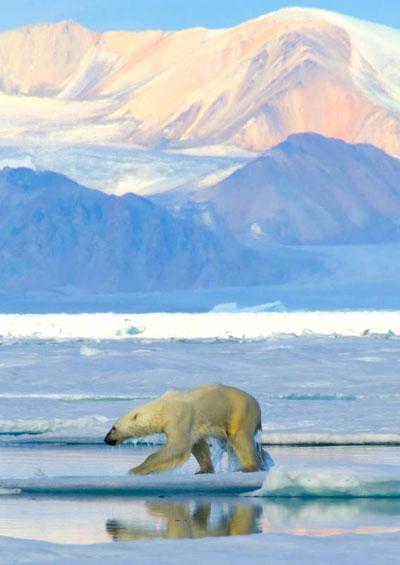 Vẻ Đẹp Trái Đất 6: Khám Phá Bắc Cực