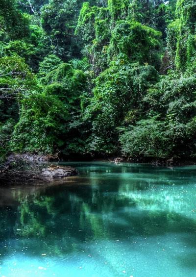 Vẻ Đẹp Trái Đất 8: Rừng Nhiệt Đới