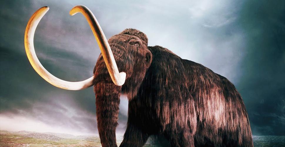 10 loài động vật là kẻ thù của con người thời tiền sử